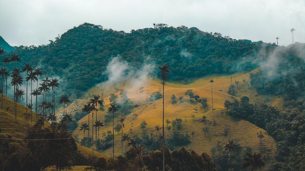 smokey mountain with coconut palm trees
