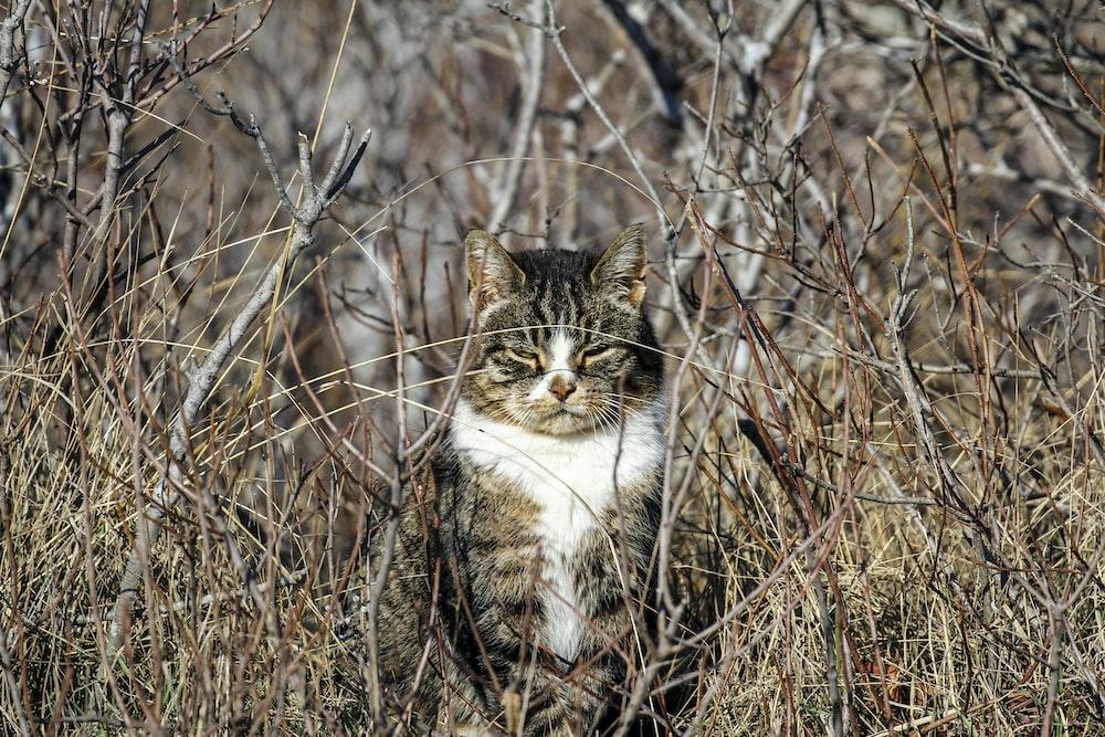 brown tabby cat on grass