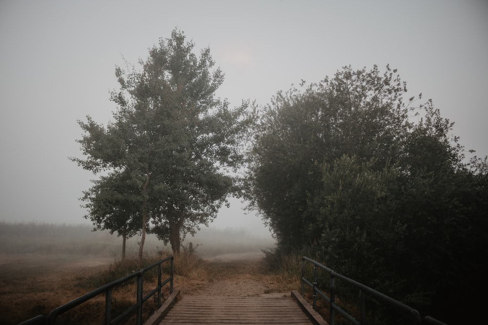 bridge and a pathway between trees