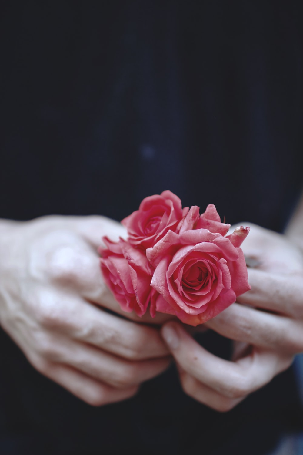 person showing pink roses
