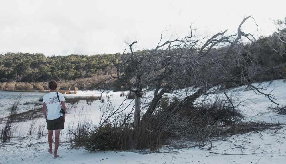 man walking on shore near driftwood