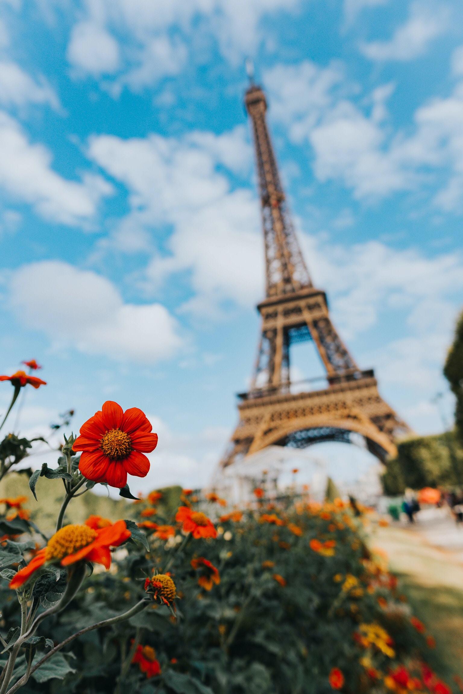 garden of flower near Eiffel Tower