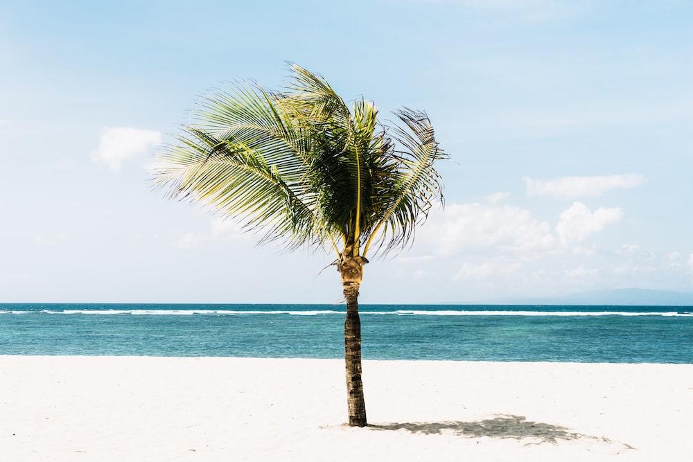 green tree on beachside