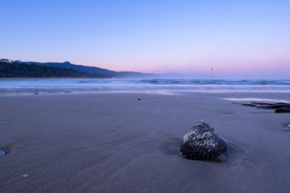 brown seashell