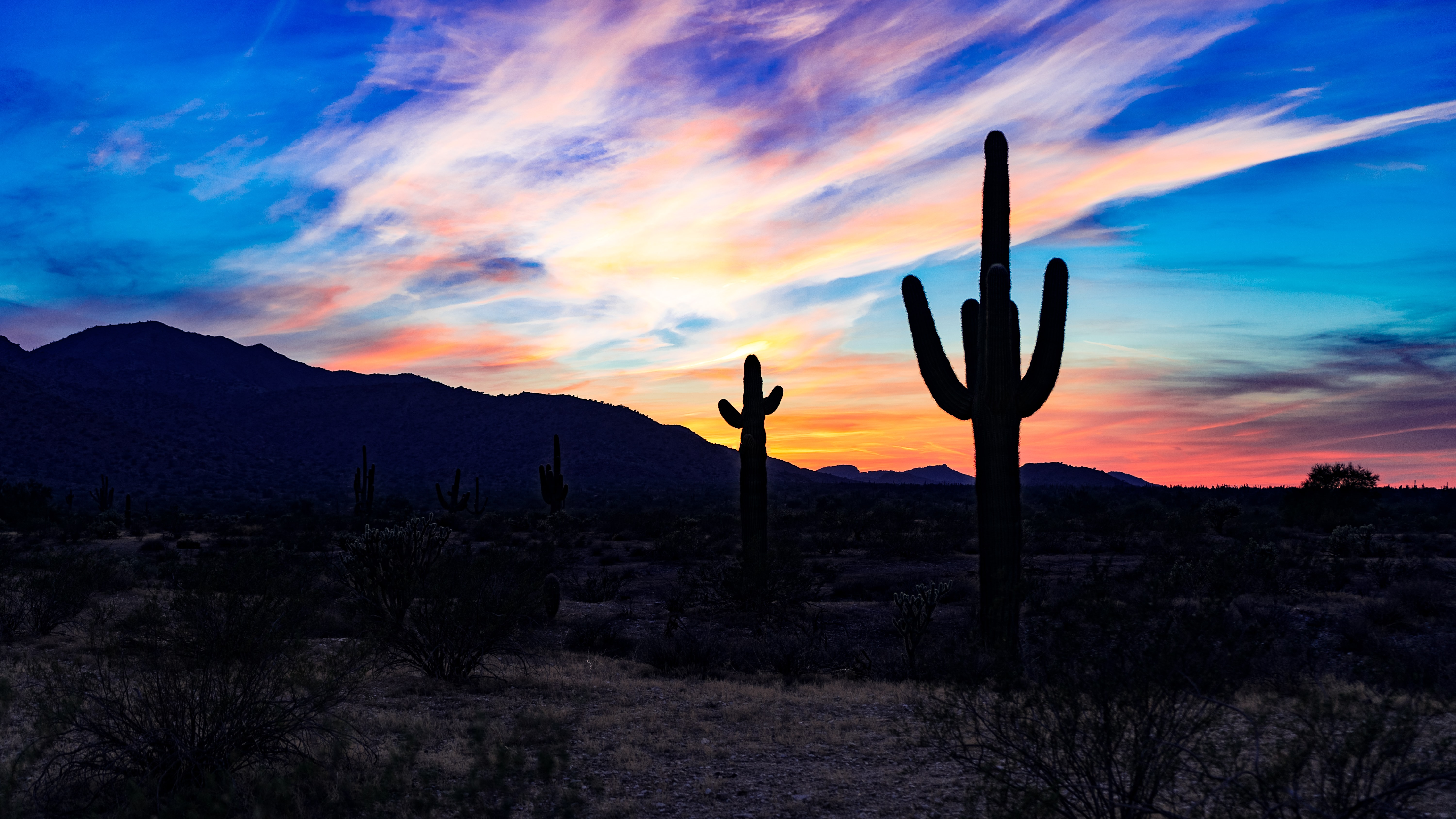 silhouette of cactus at the desert