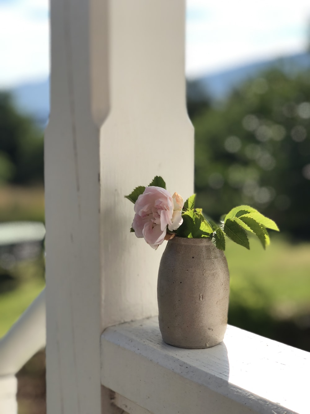 photo of pink petaled flowers with pot