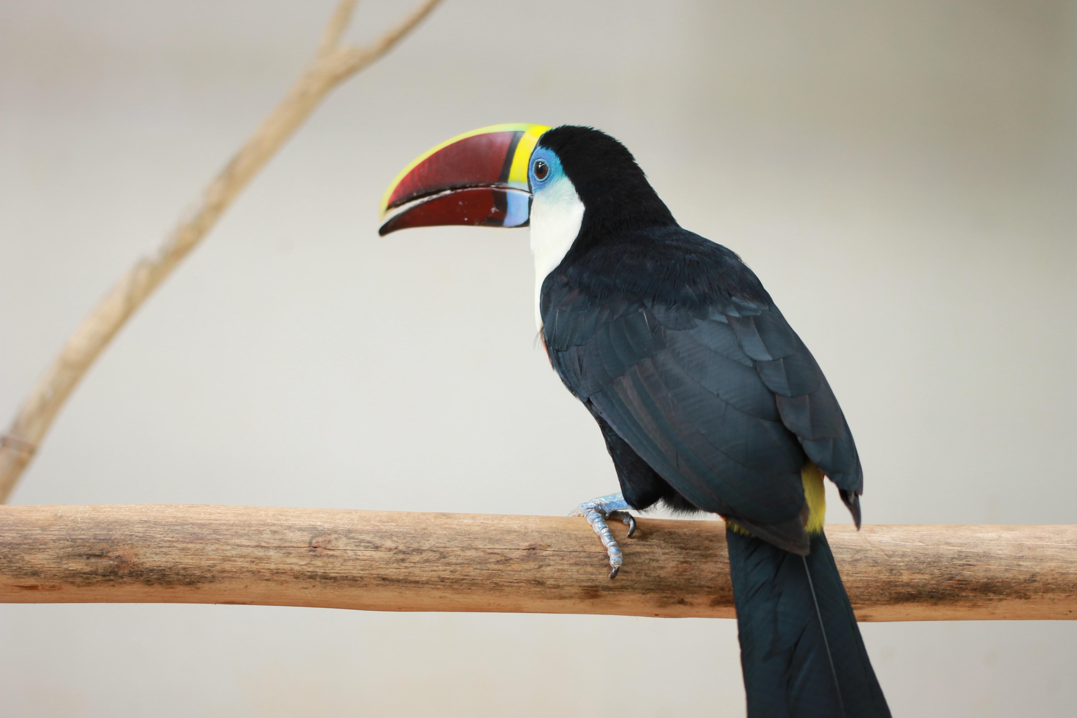 red long beak bird on steam