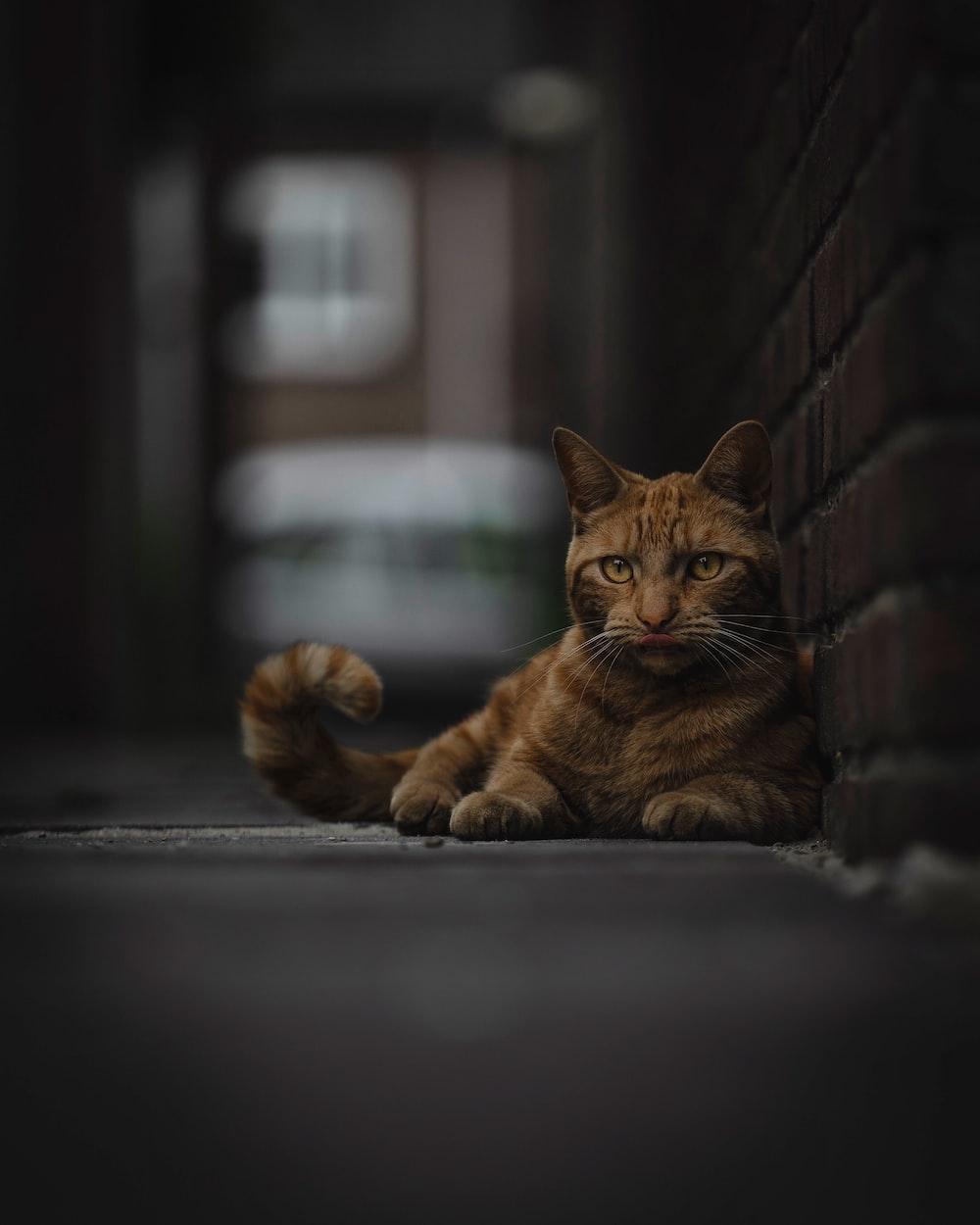 orange tabby cat beside wall