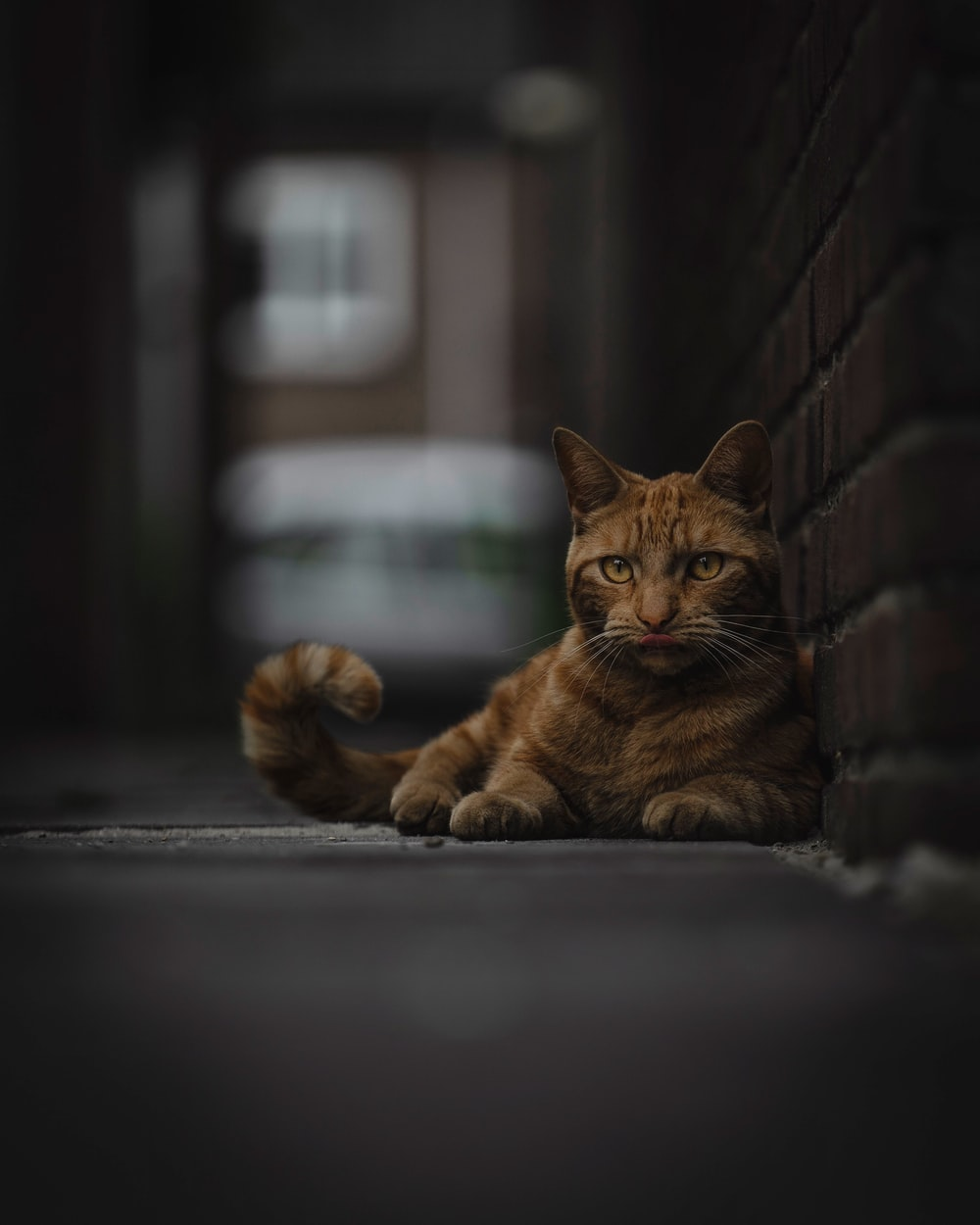 orange tabby cat beside wall