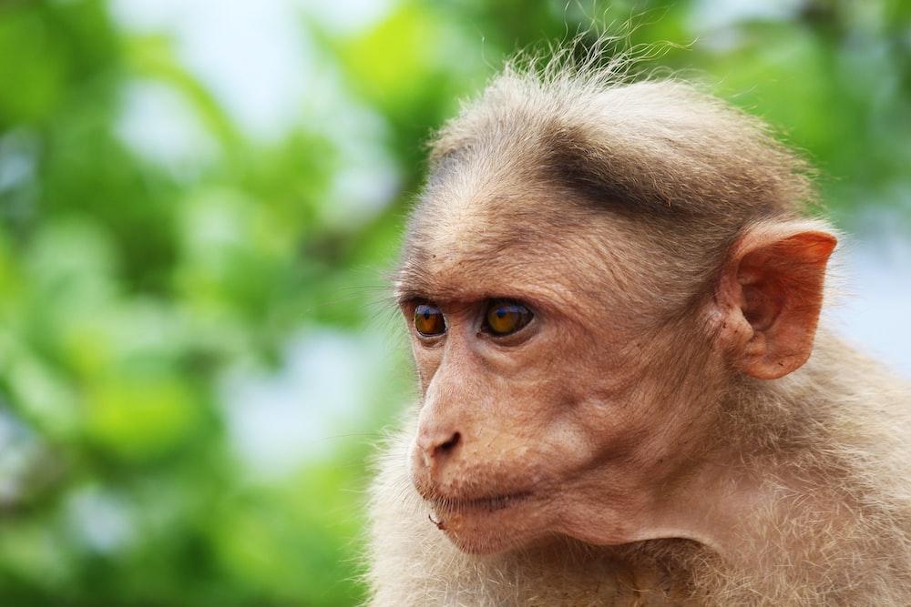wildlife photography of primate