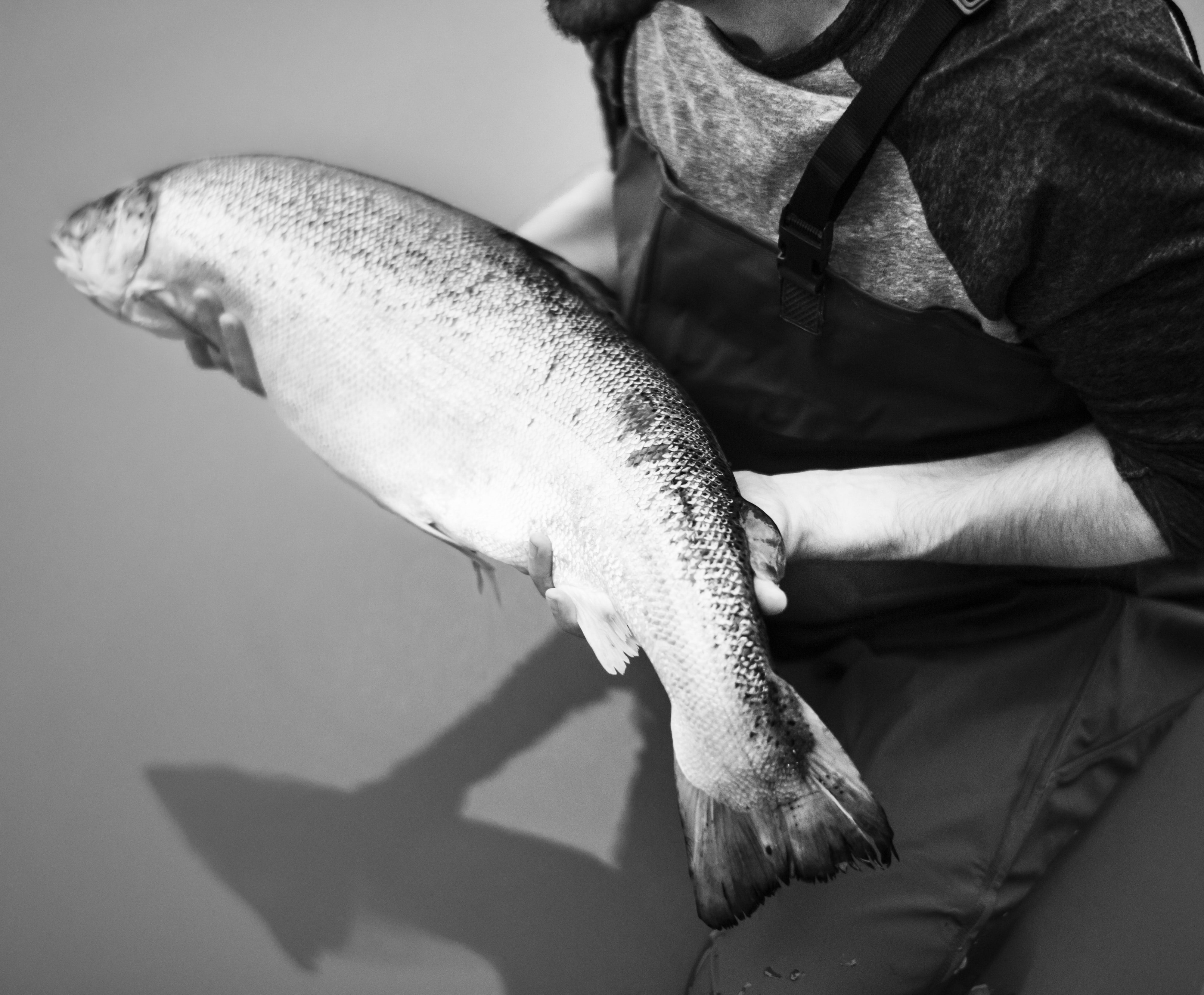 grayscale photo of person holding fish