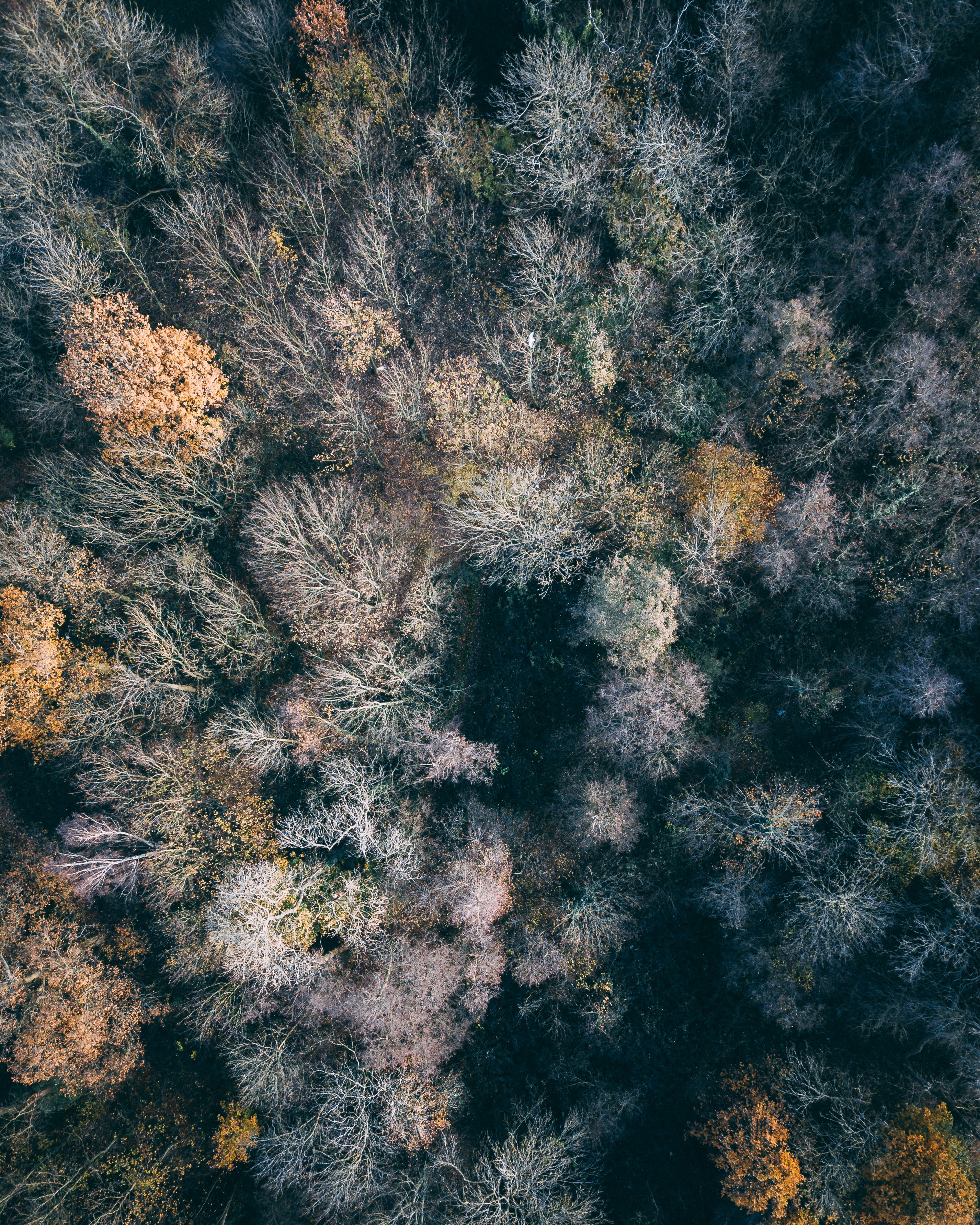 aerial photography of bare trees during daytime