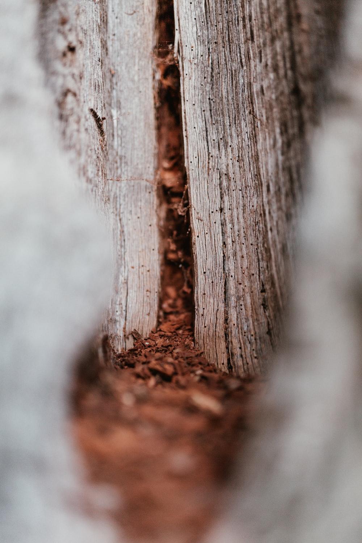 wood dust macro photography