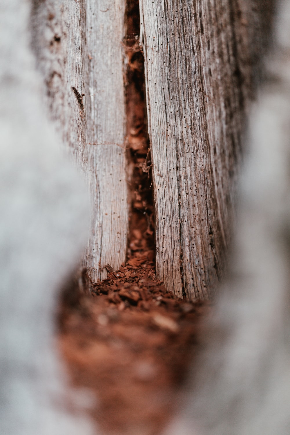 wood dust macro photography
