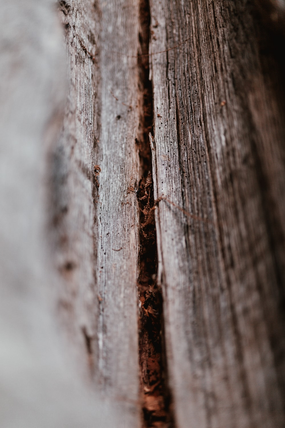 selective focus of brown wood