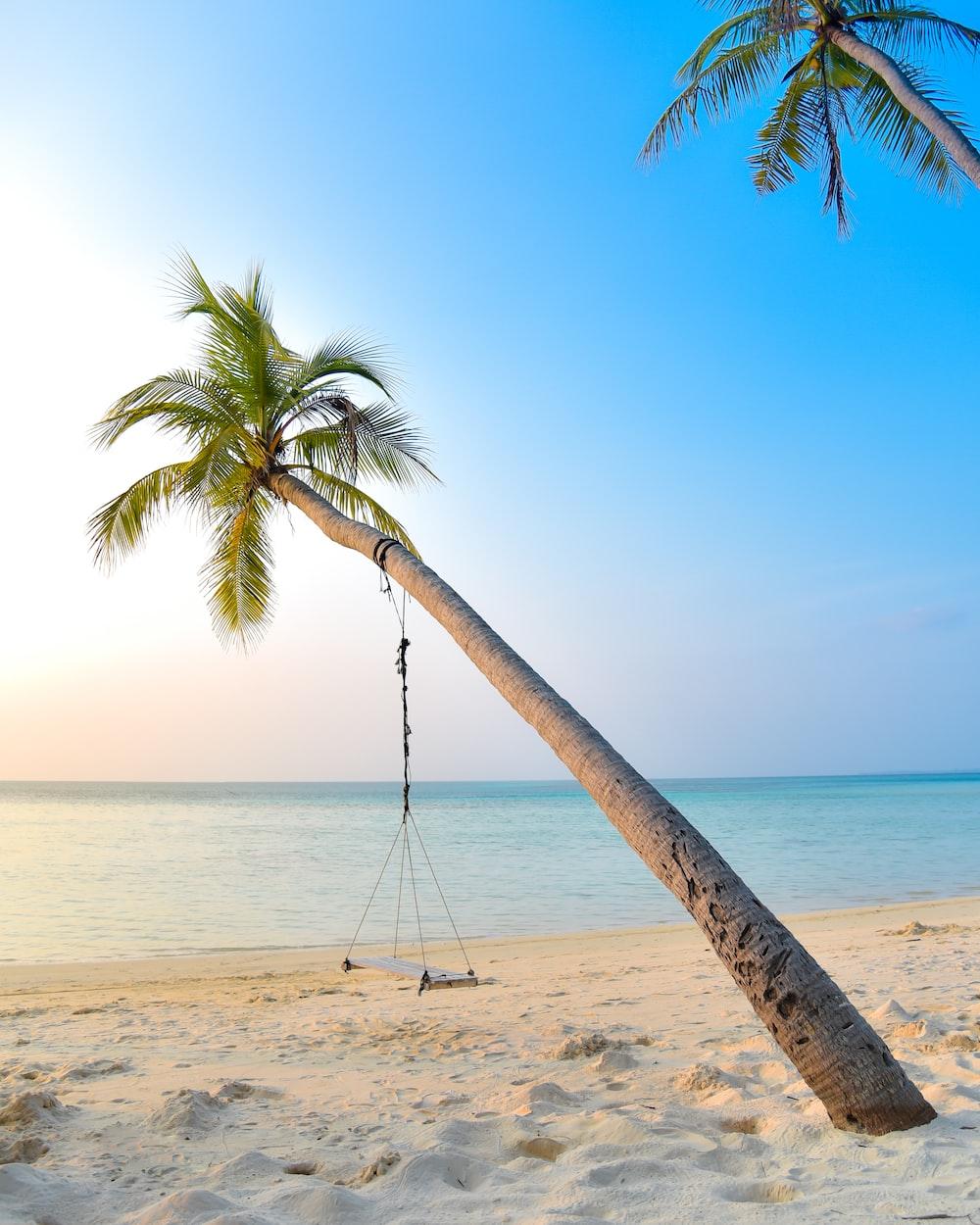 swing hang on coconut tree near seashore