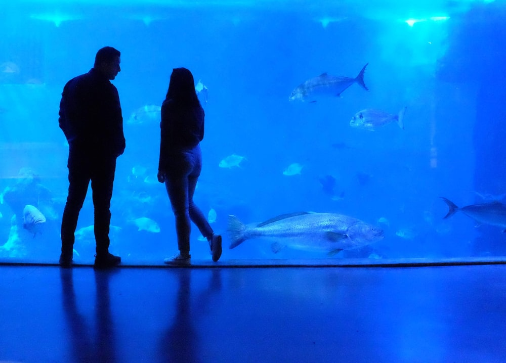 silhouette of man and woman standing near glass fish tank