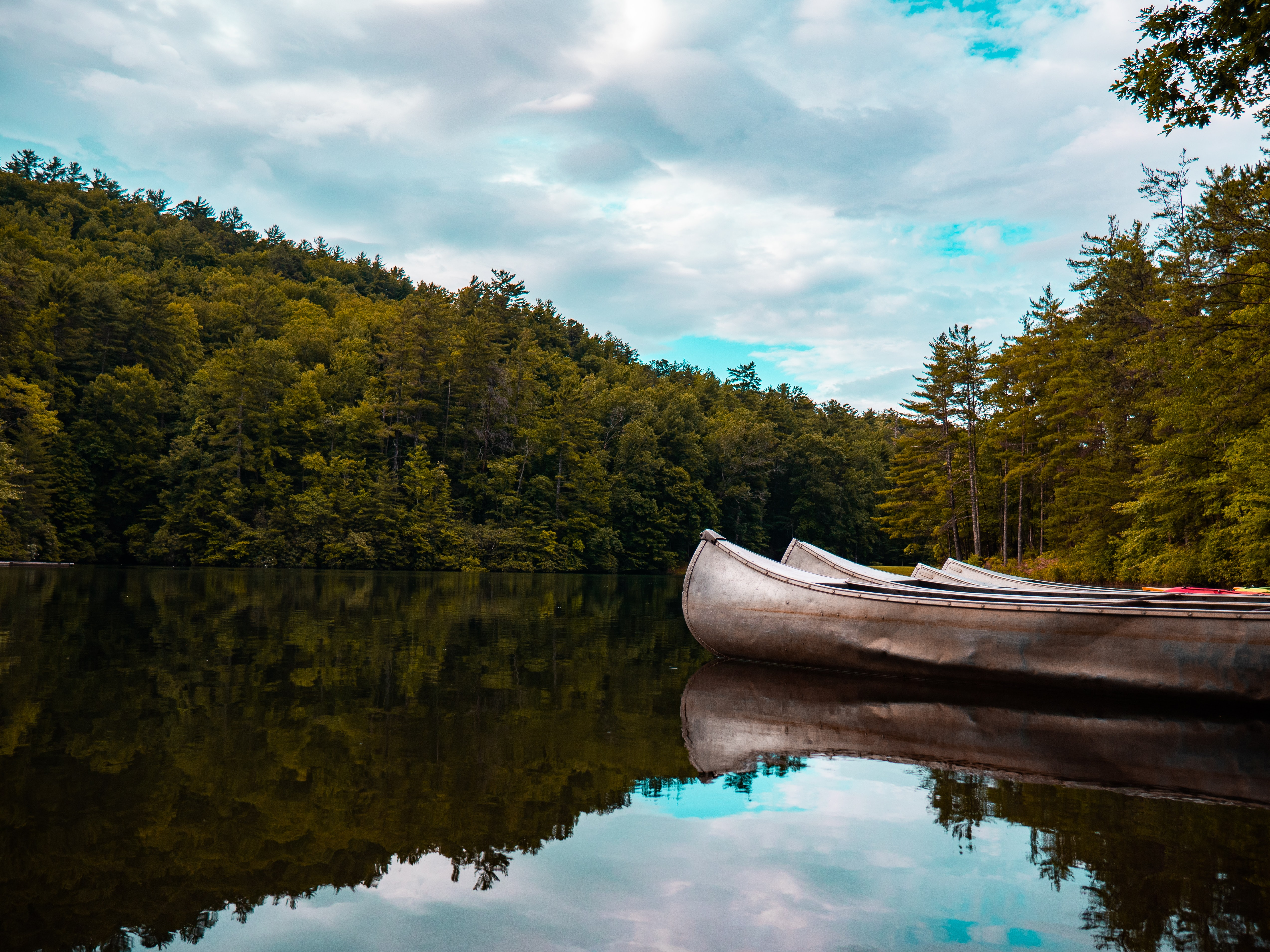 white canoe on river surrounded by trees