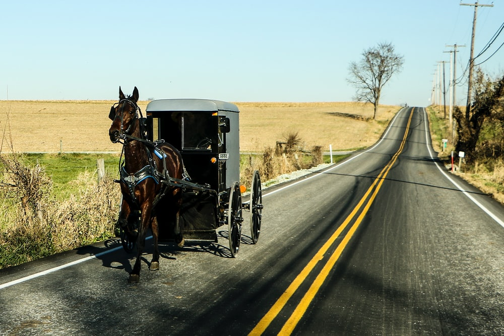 horse and carriage on road