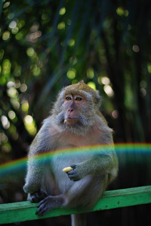 brown monkey sitting on wood