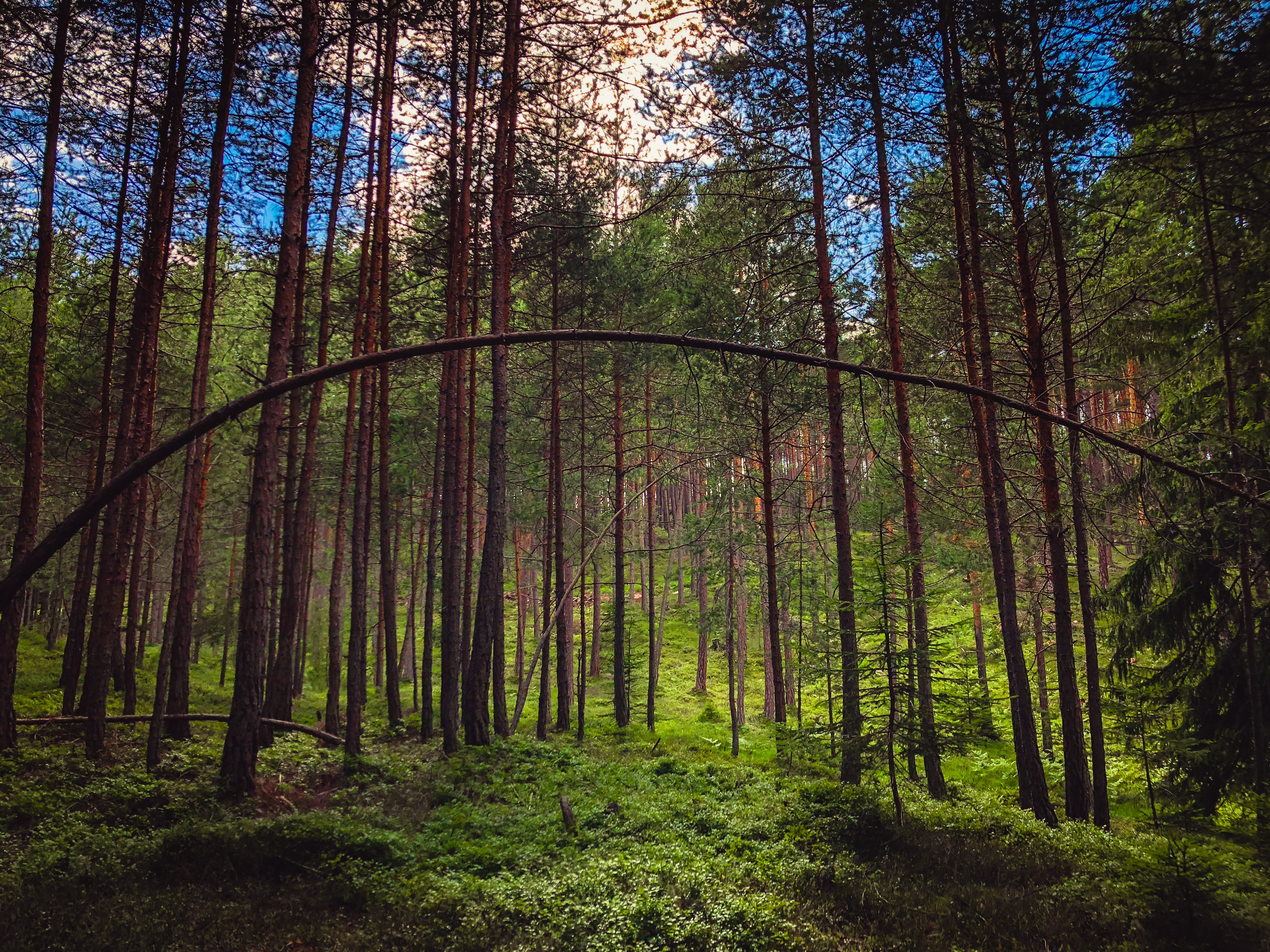 photo of forest with trees
