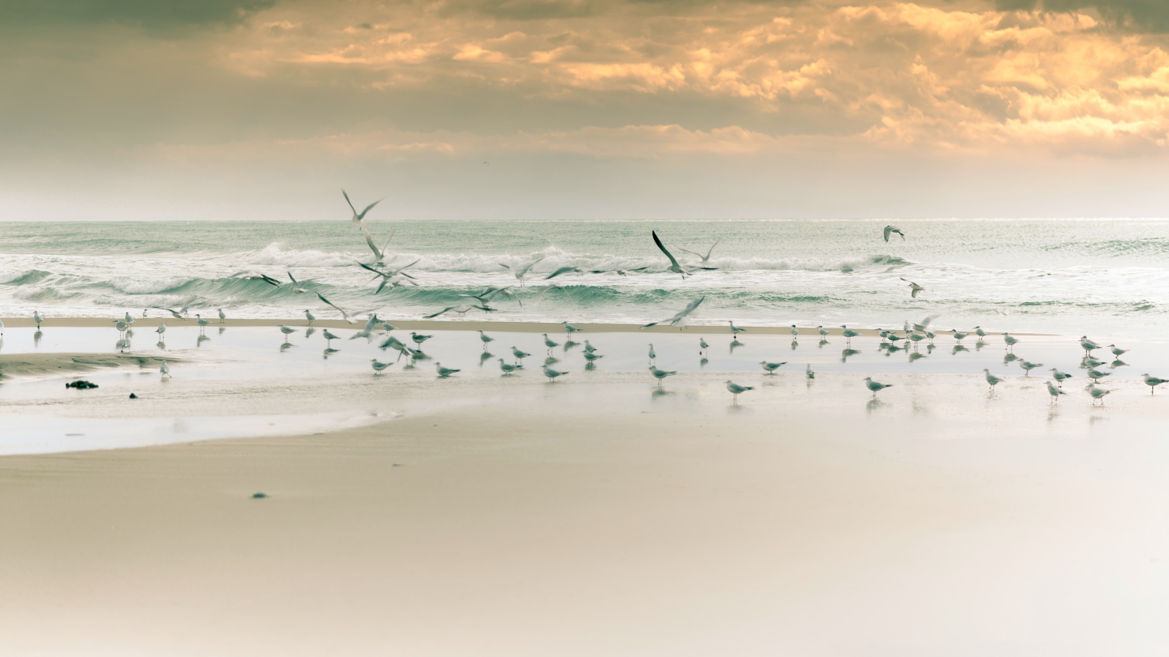 flock of birds on shore