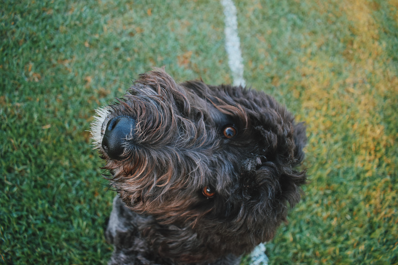 long-coated black dog on lawn