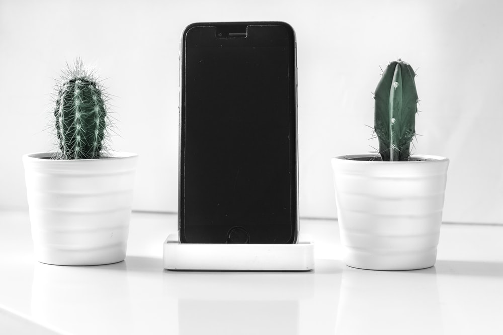 post-2016 iPhone near cactus plants
