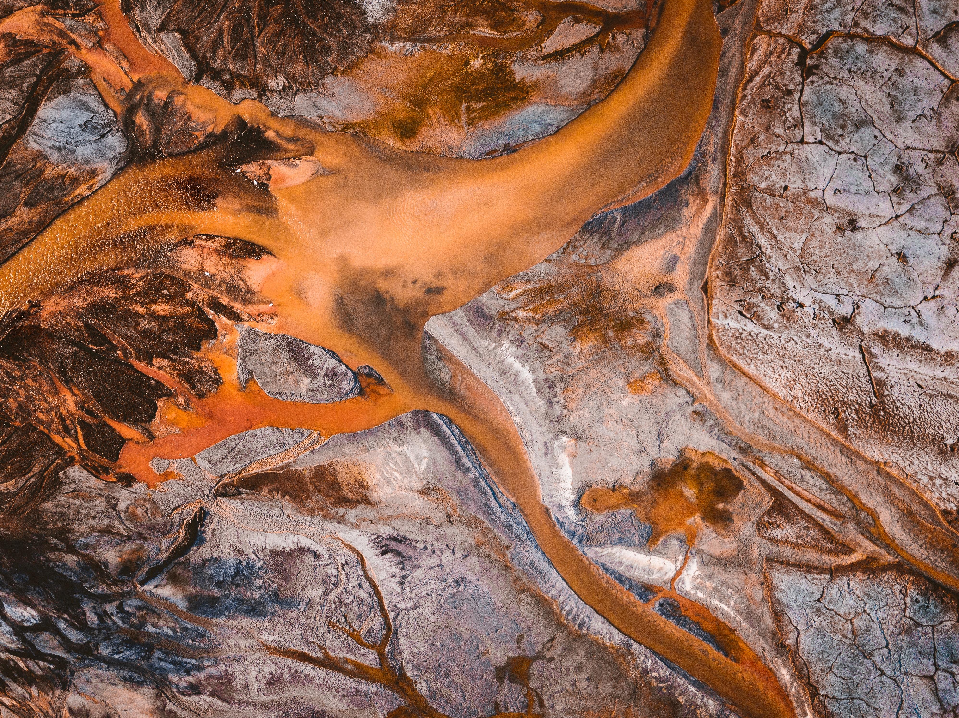 brown tree root