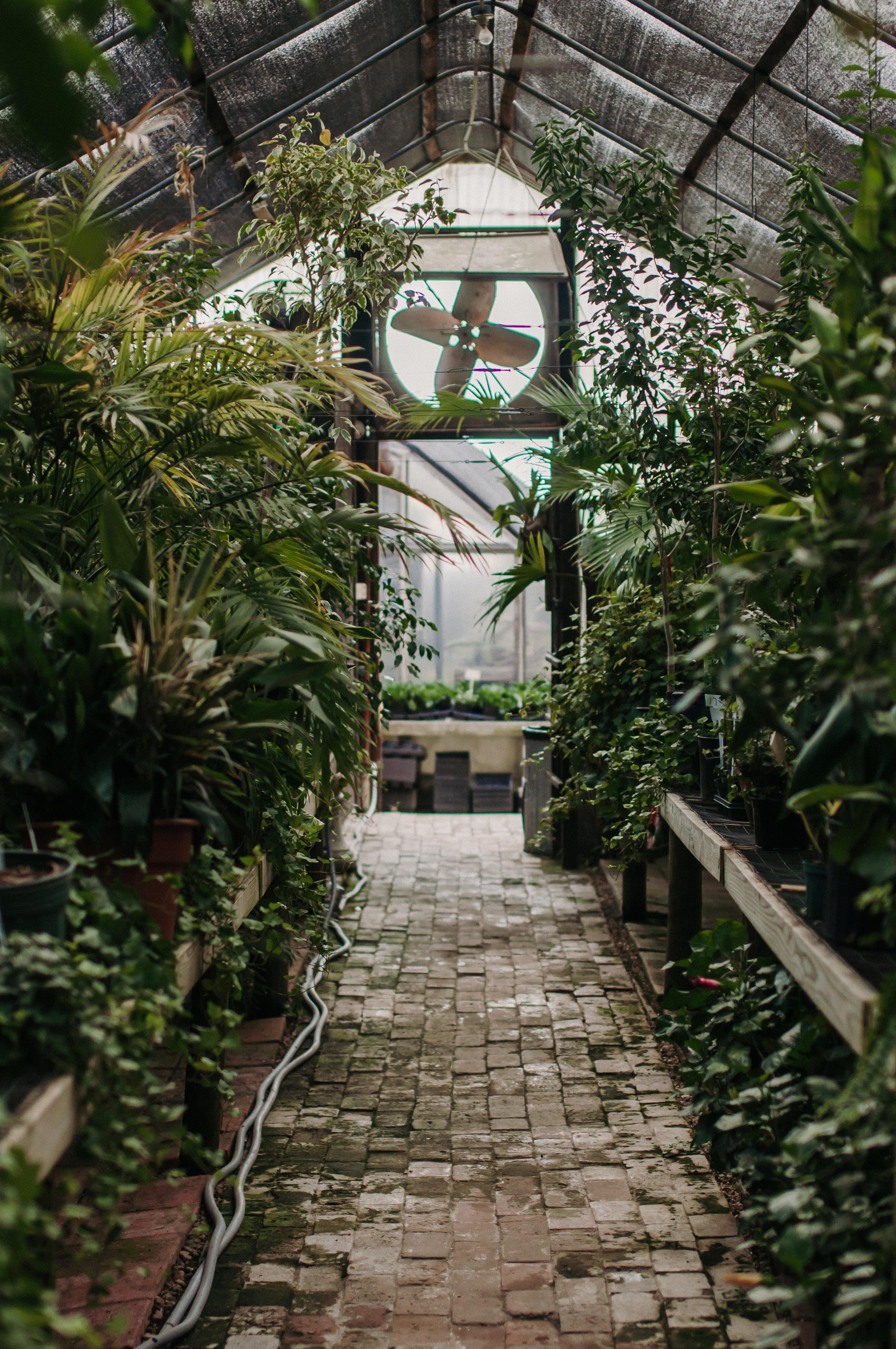 photo of greenhouse interior