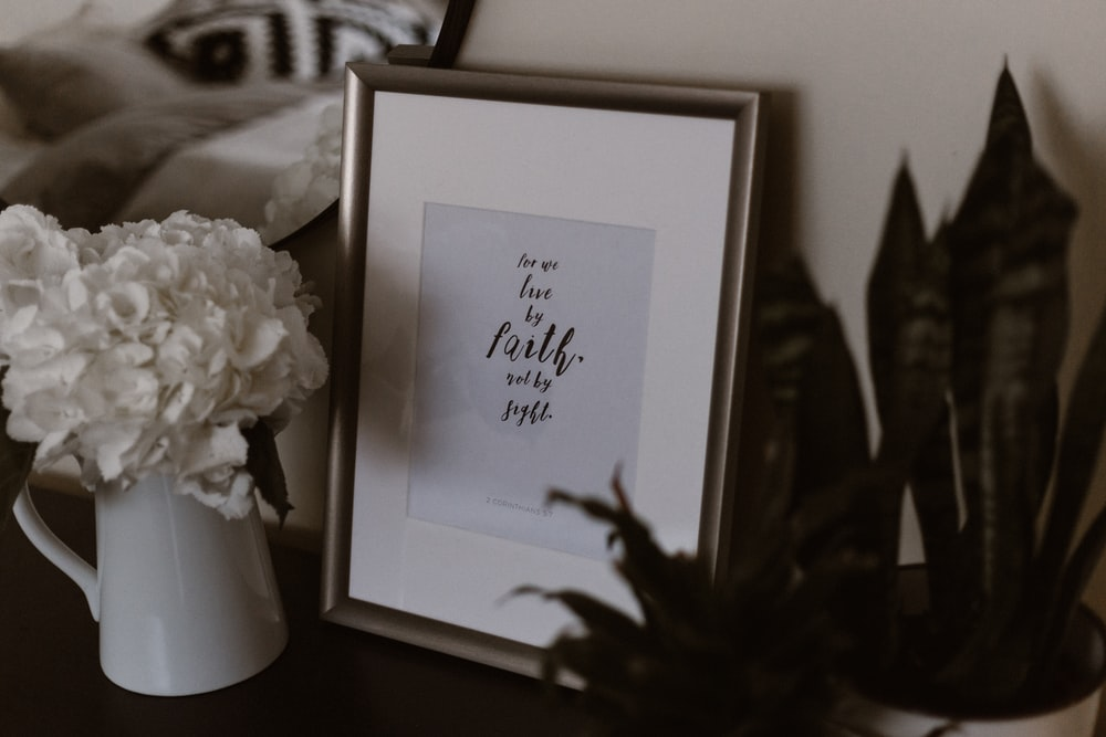 white petal flower beside picture frame