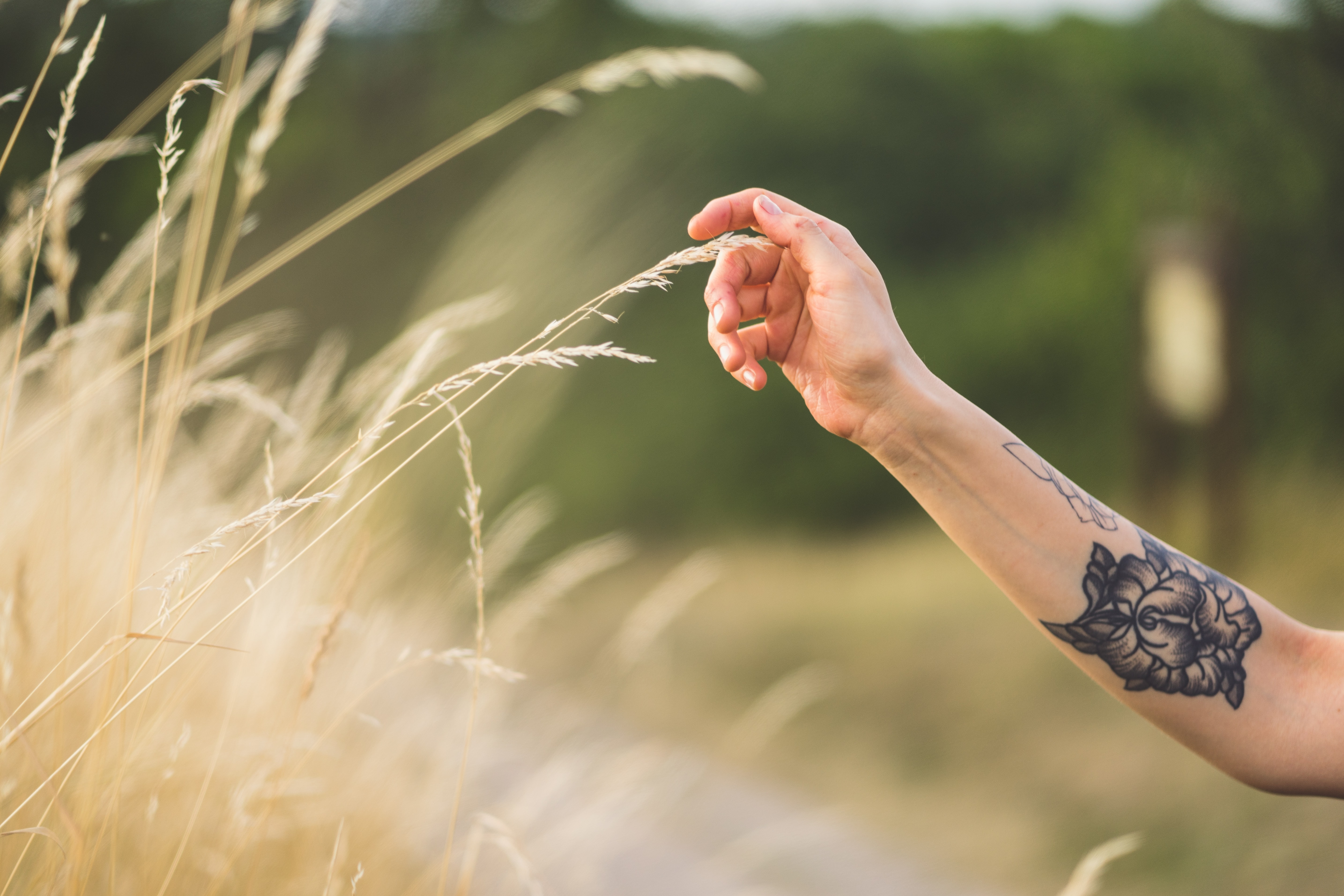 person hand holding a wheat