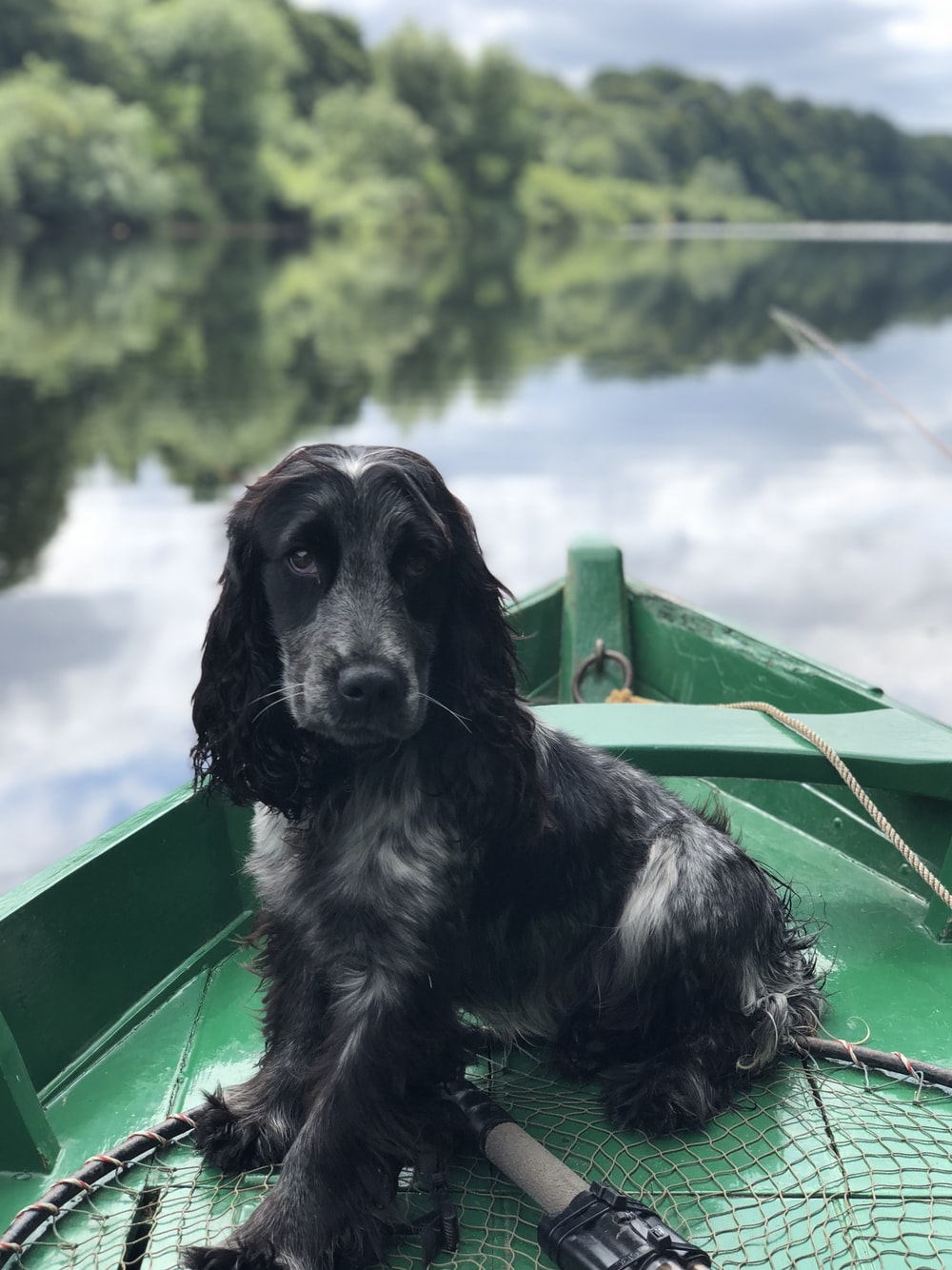 black dog sitting on boat on body of water