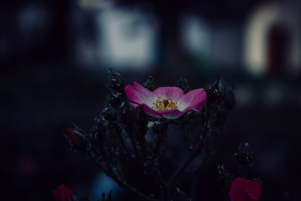 500 Beautiful Flower Pictures Download Free Images On Unsplash