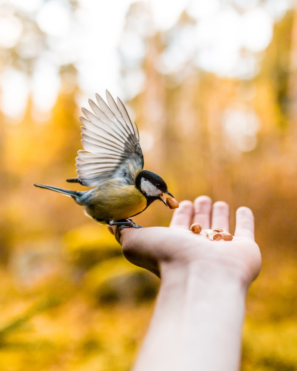 photo of brown and black bird on person palm eating a food