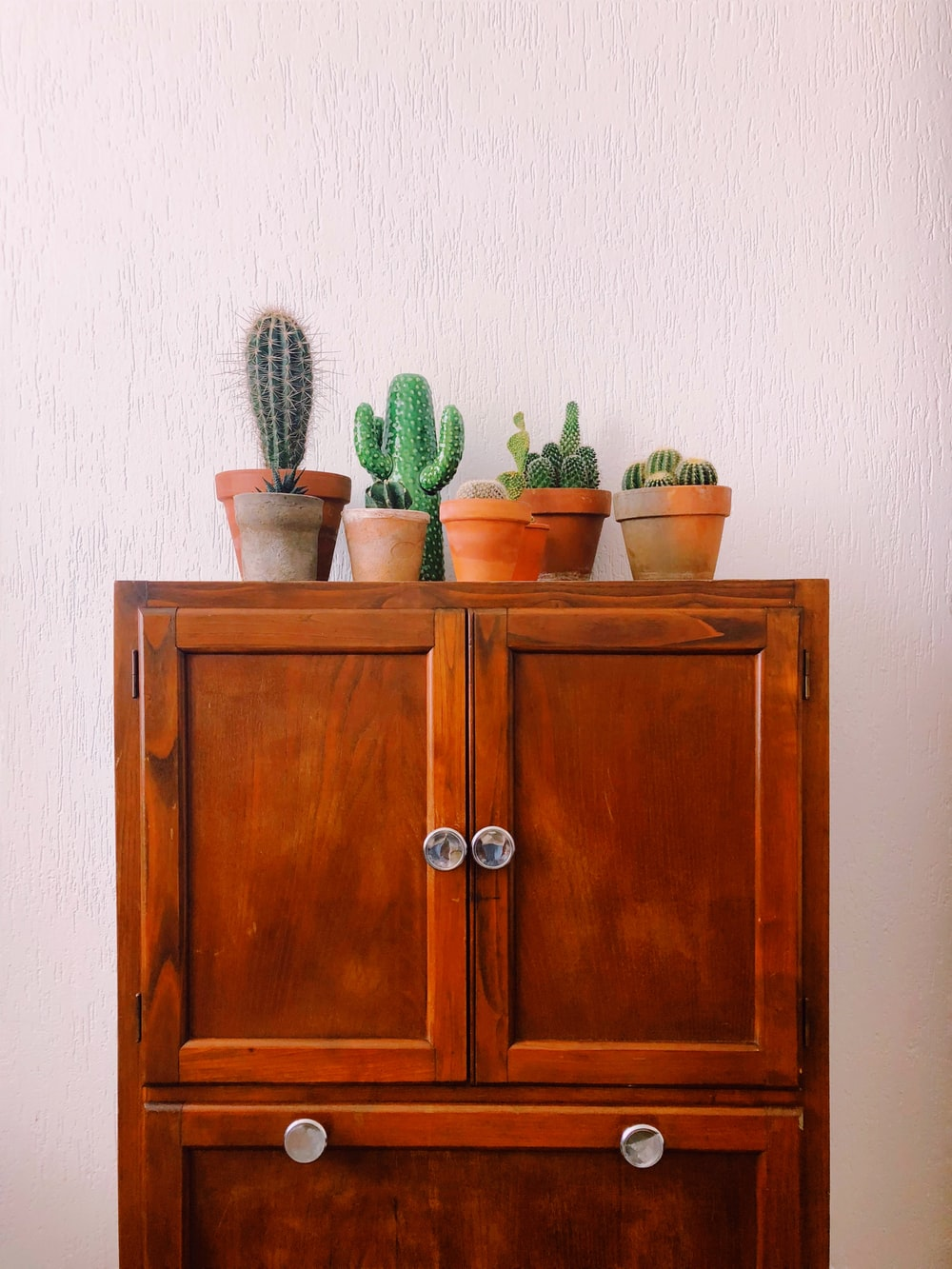 green cactus plant on brown wooden cabinet