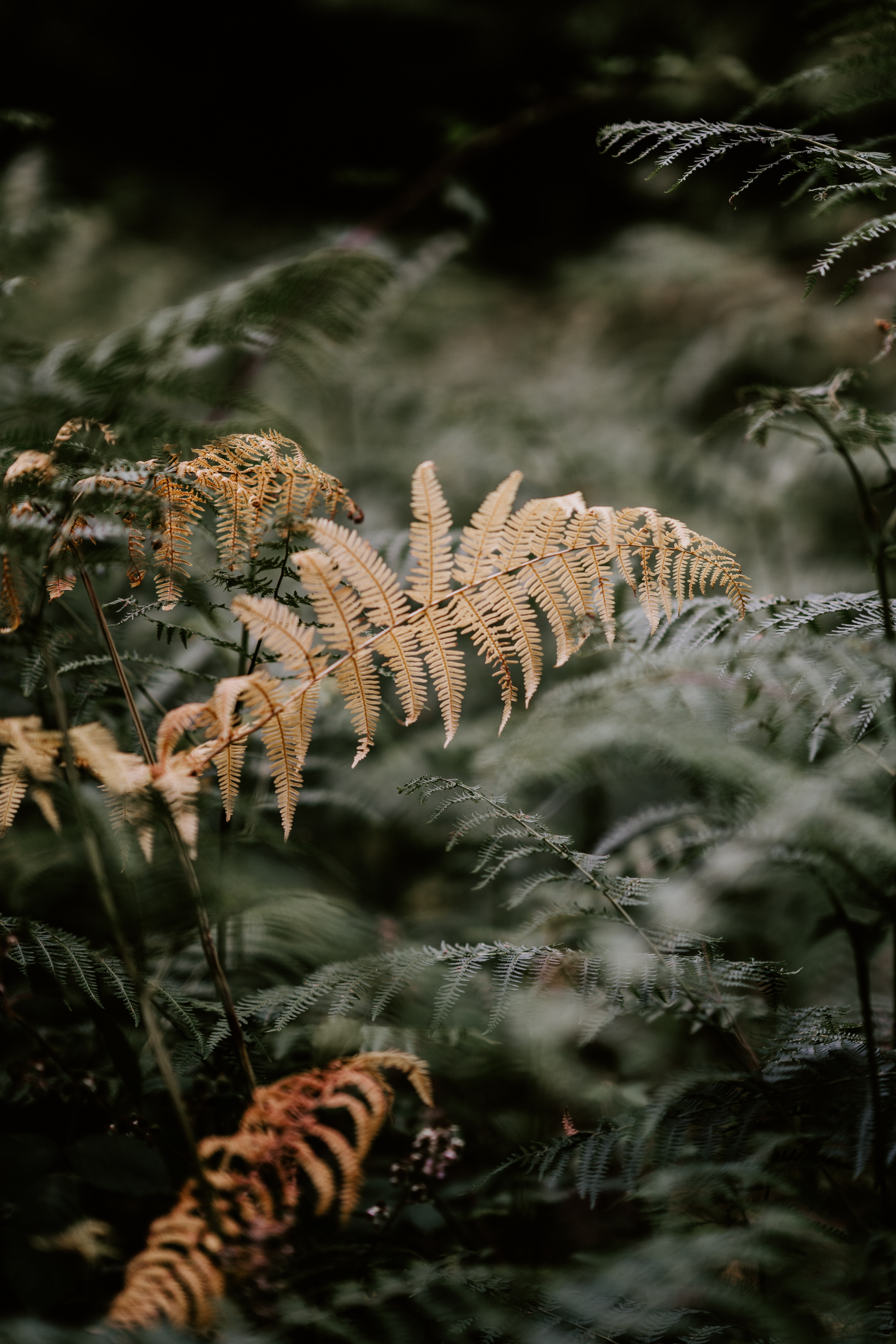 tilt shift lens photography of yellow and green plants