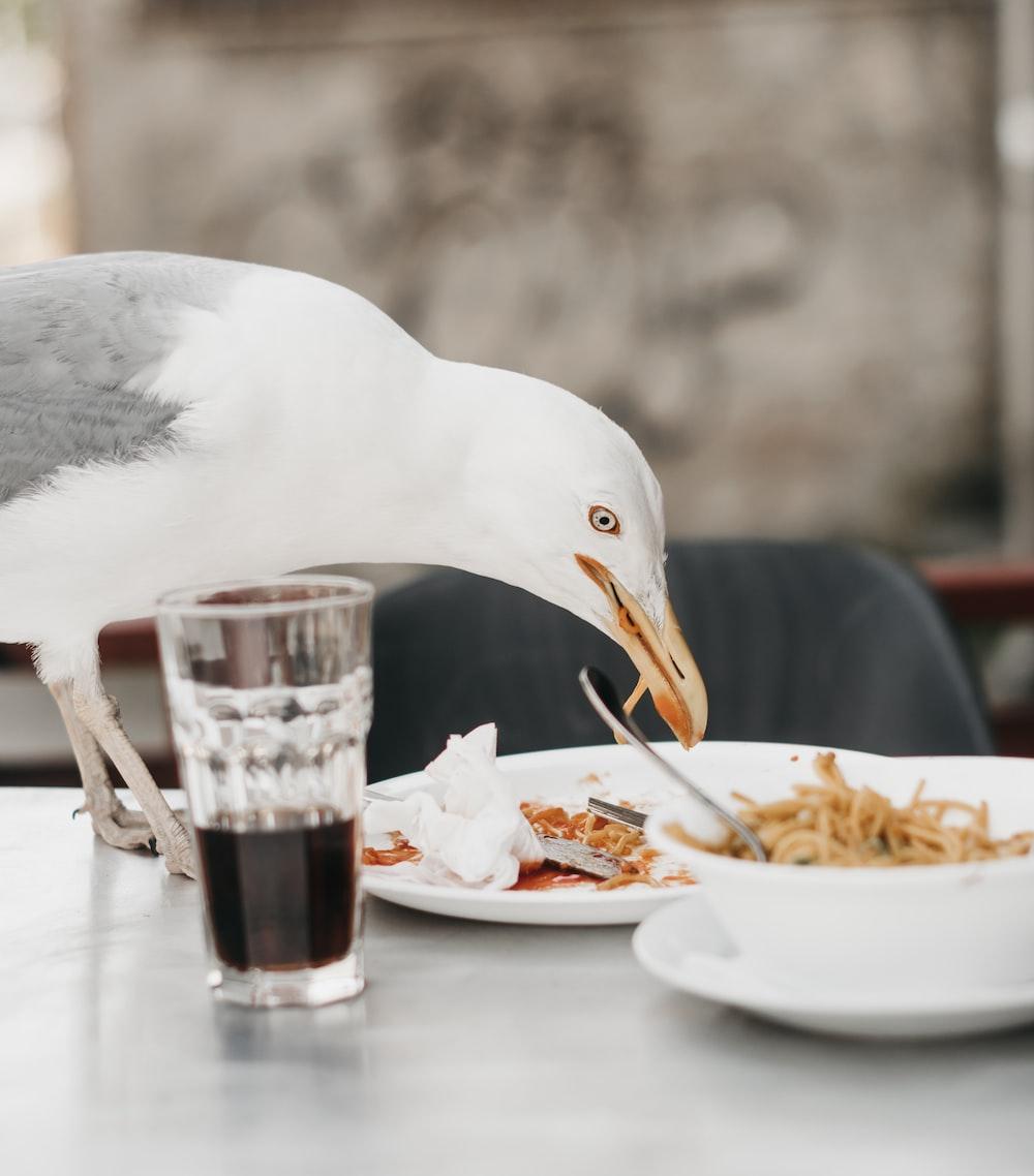 bird standing on table