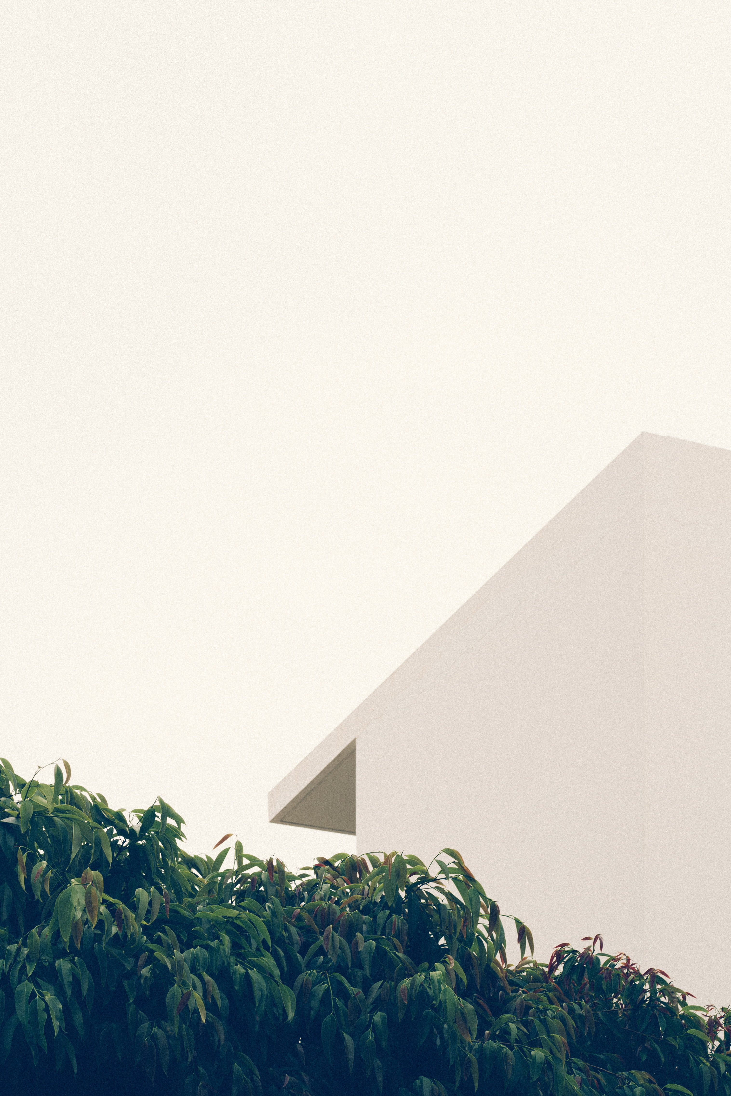 green leafed tree beside white concrete building