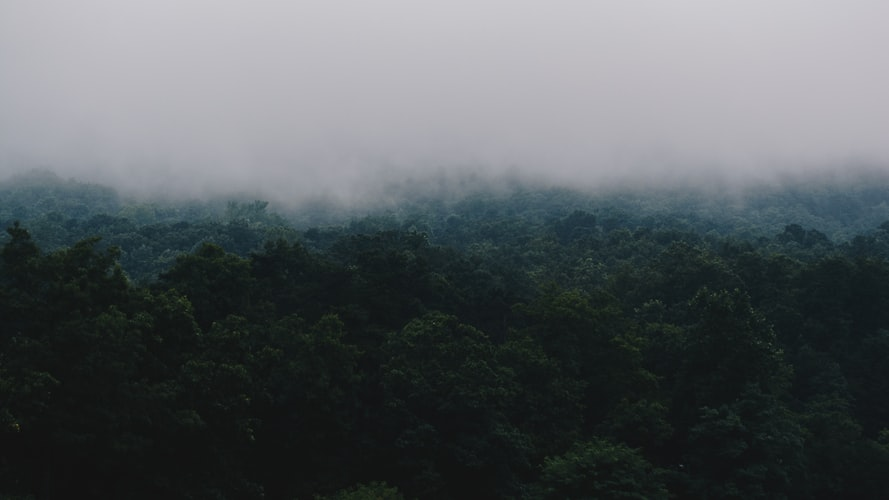 A photo of a mountainside with fog completely obscuring the top half and dark trees visible underneath. The result is an appearance of mystery, foreboding, or fading into obscurity.