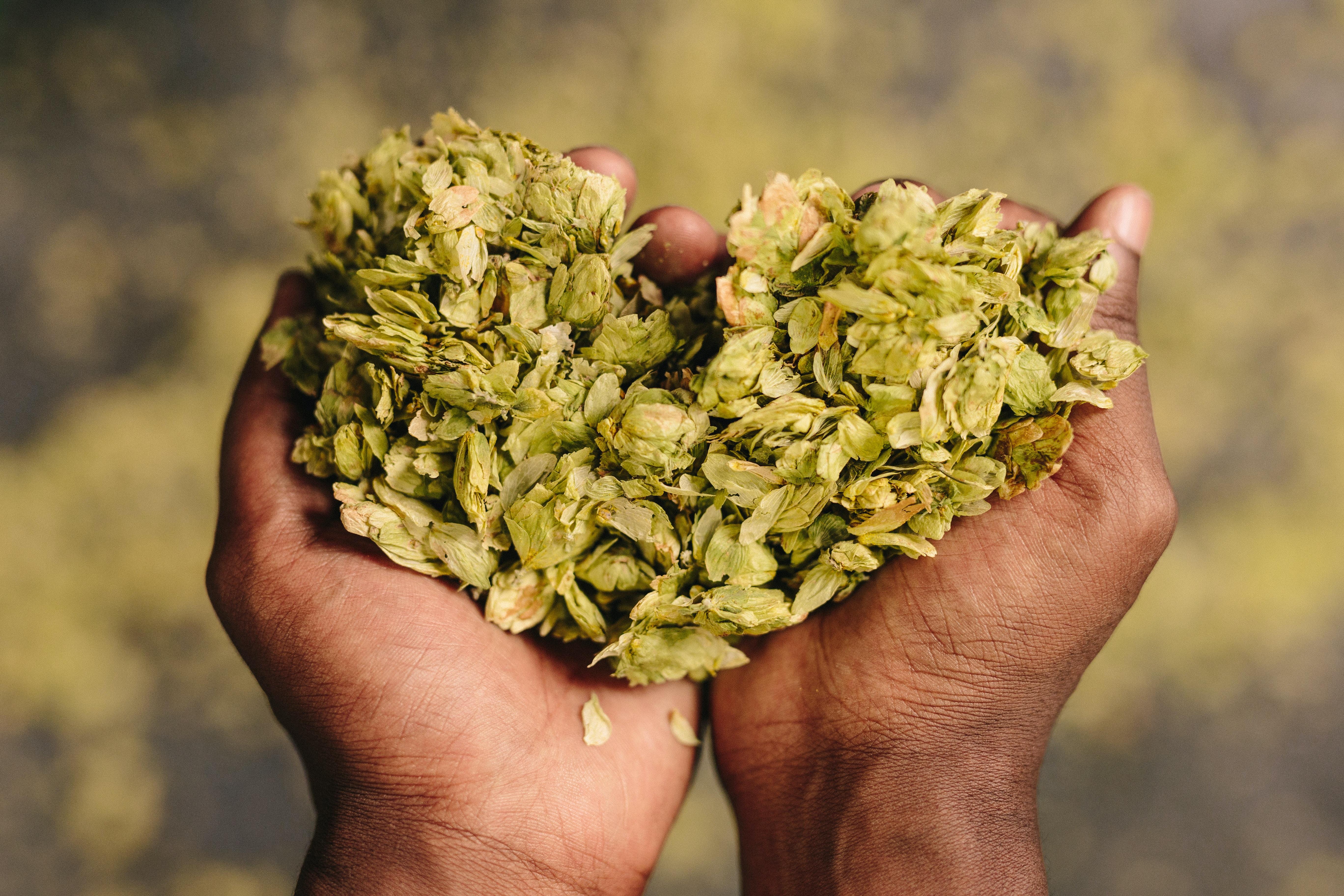handful of green leaves