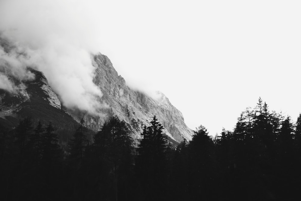 grayscale photograph of forest and mountain