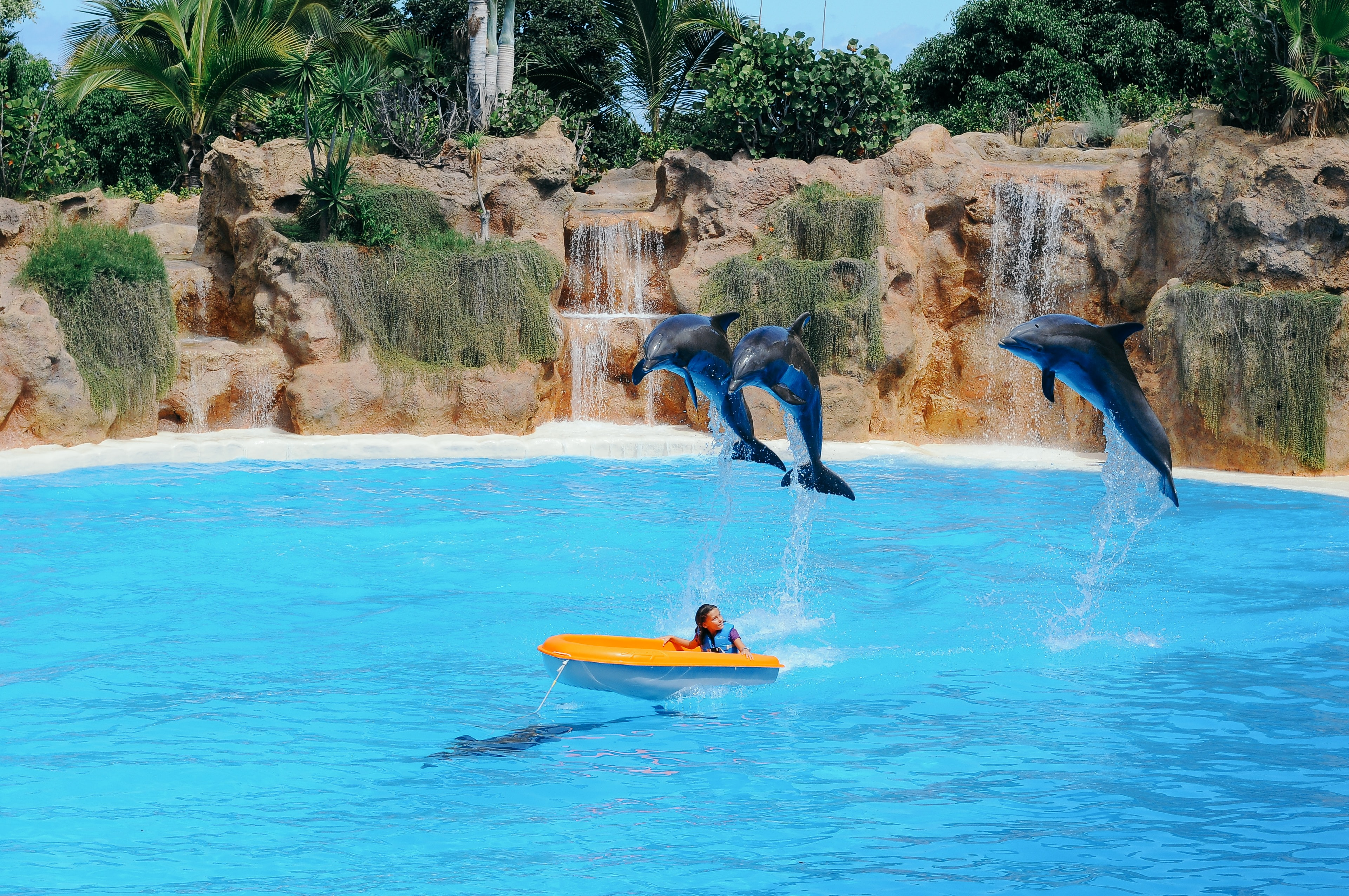 three dolphin jumps to swimmer