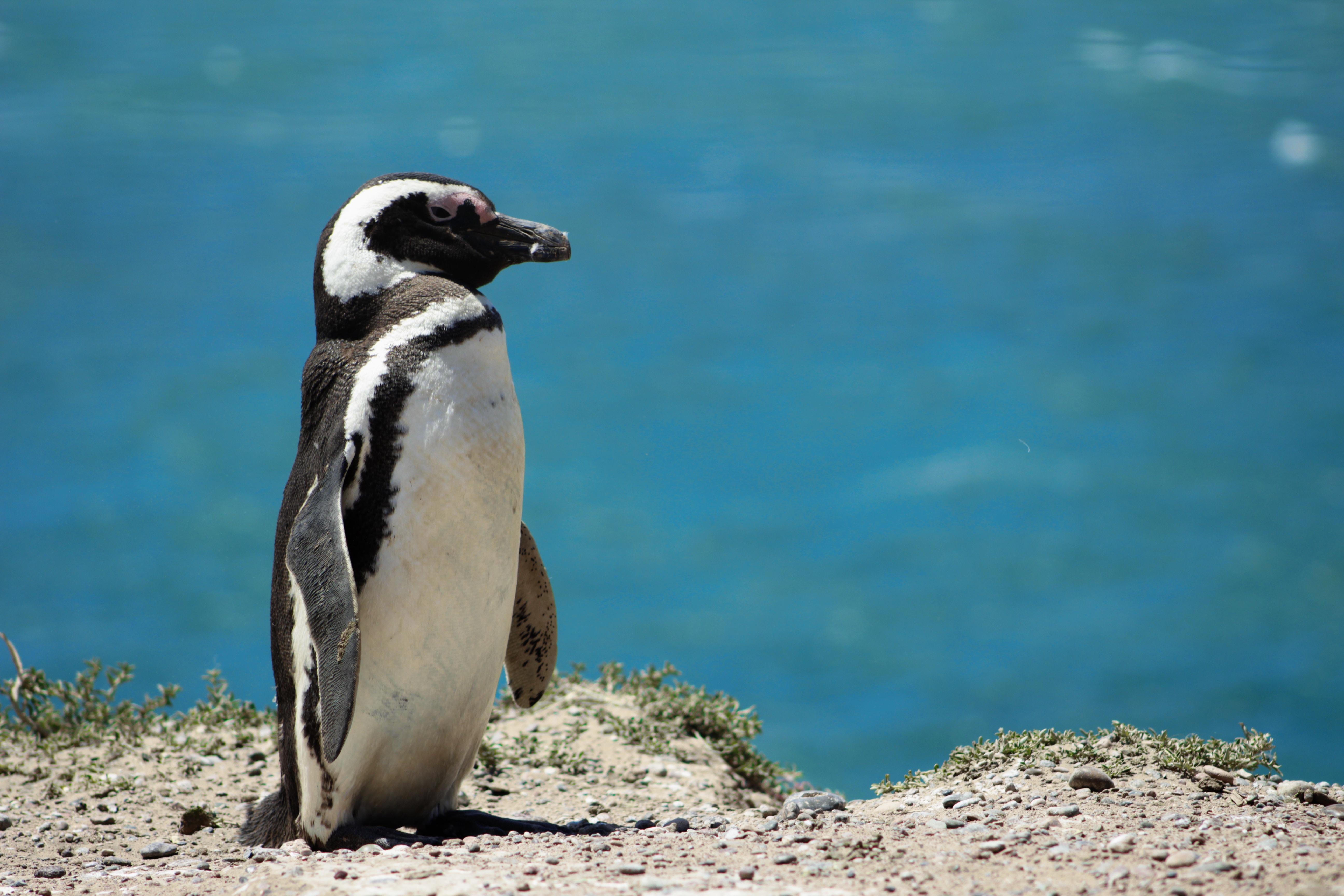 penguin during daytime