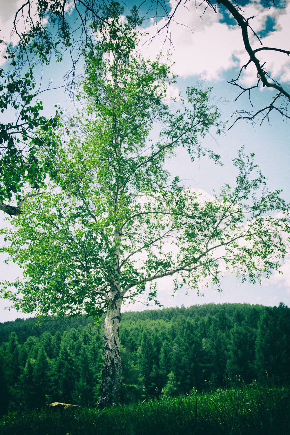 green leafed tree during daytime