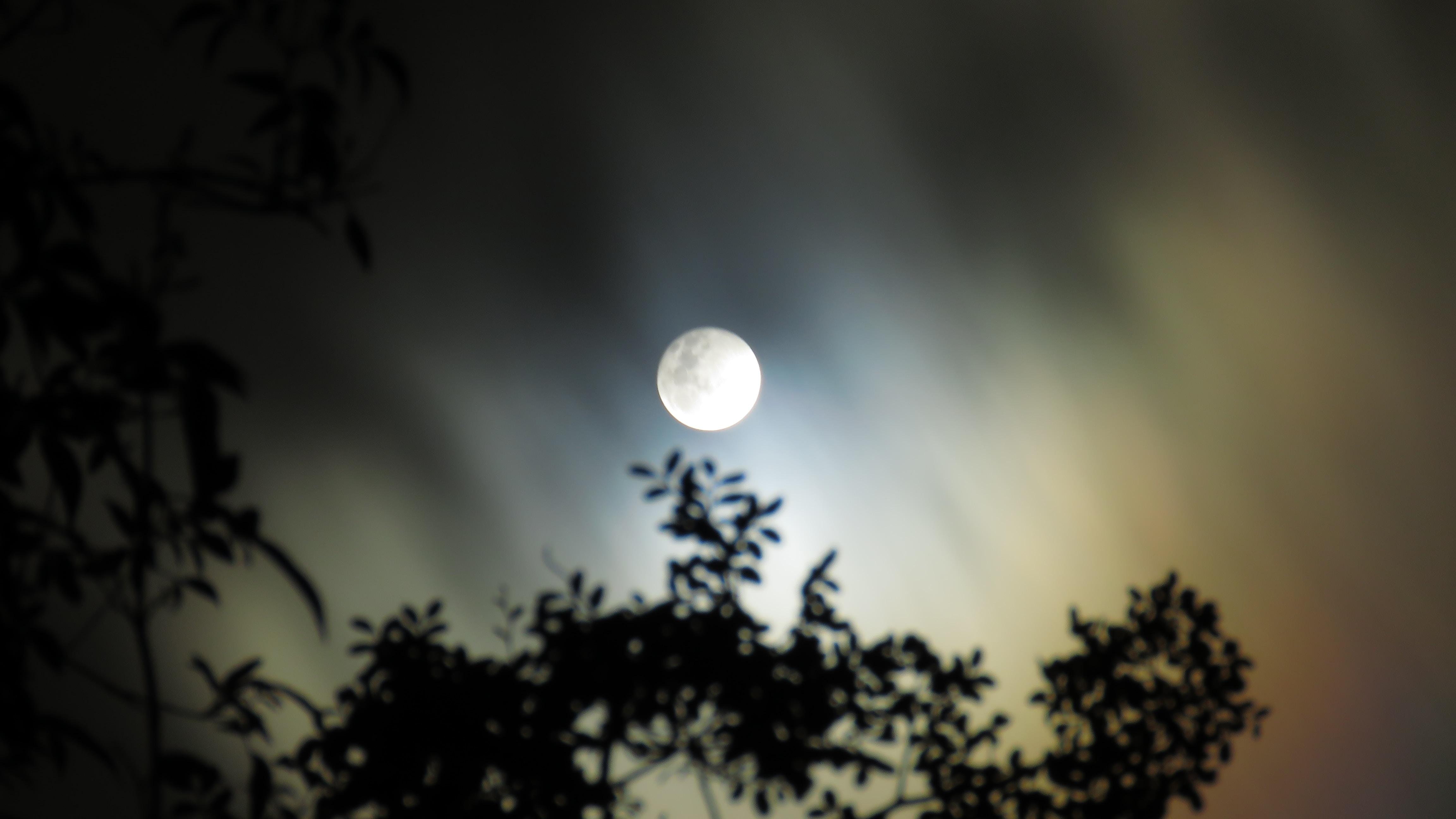 full moon in worm's eye view