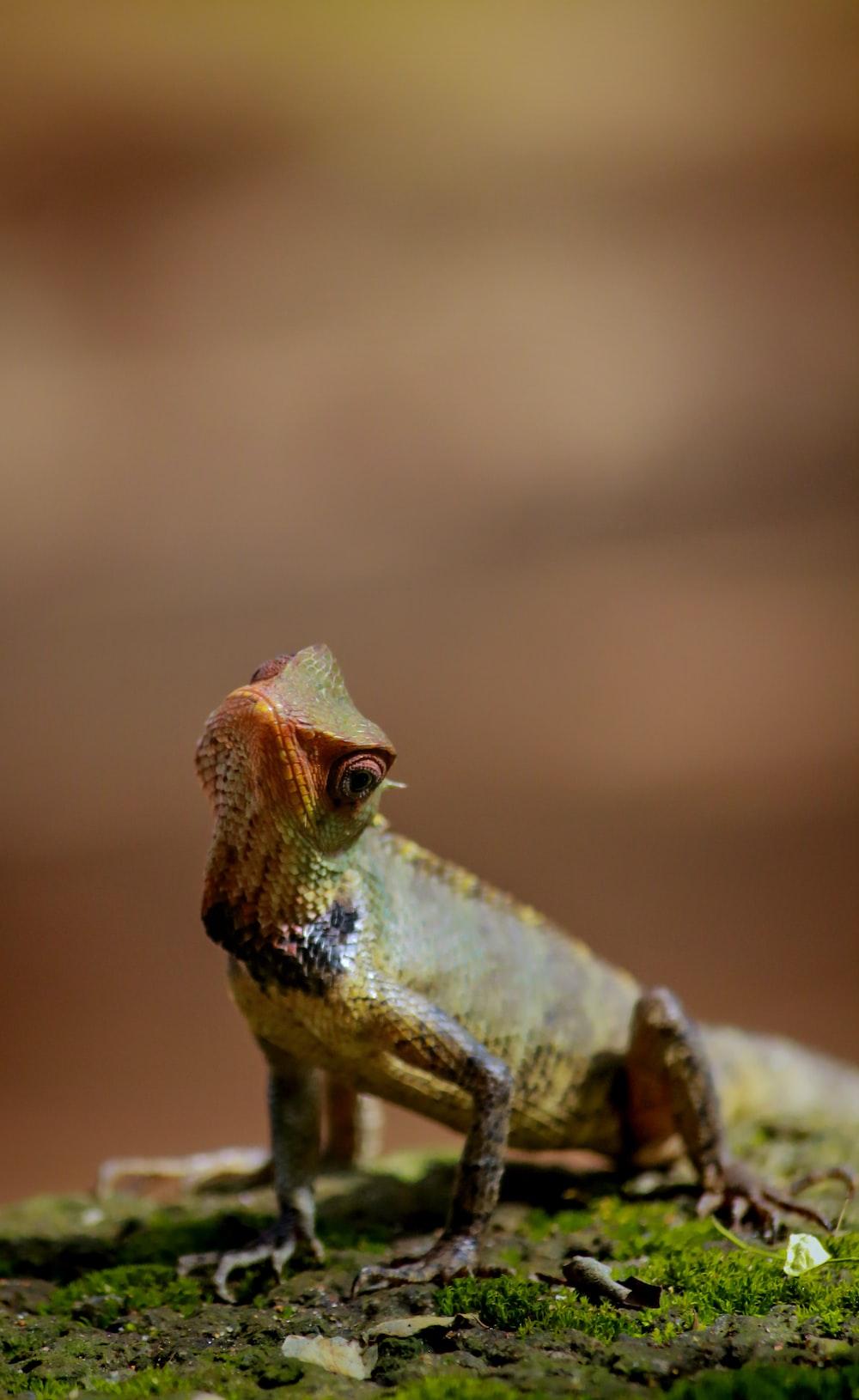 shallow focus photo of reptile