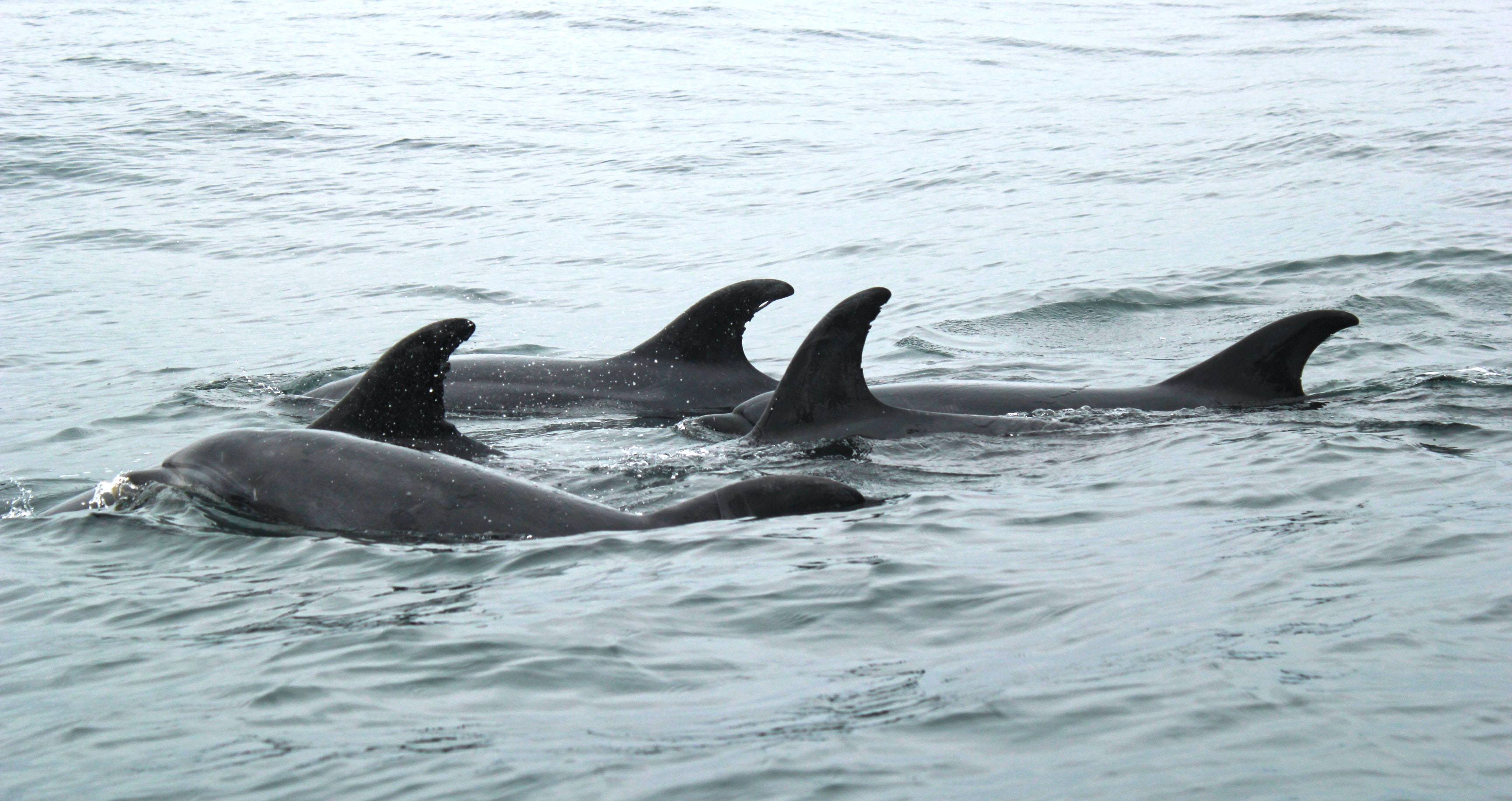 closeup photography of four black dolphins at daytime