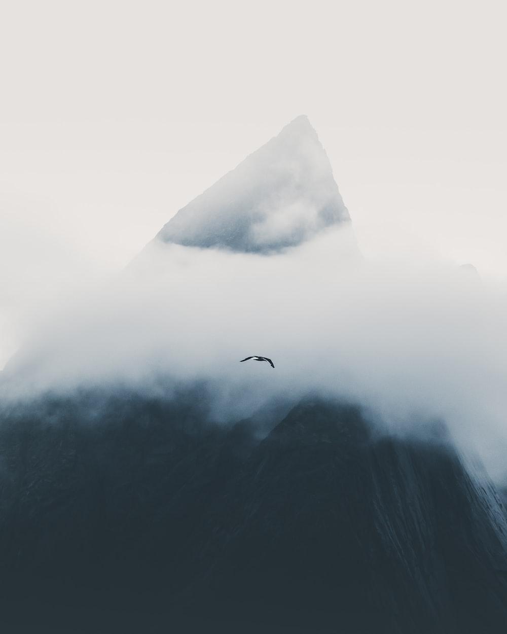 black bird in flight during daytime