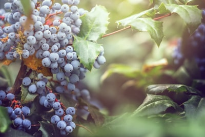4663. Bor,szőlő, borászatok